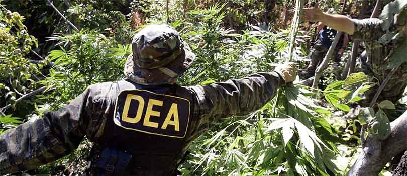 Law Enforcement Cannabis