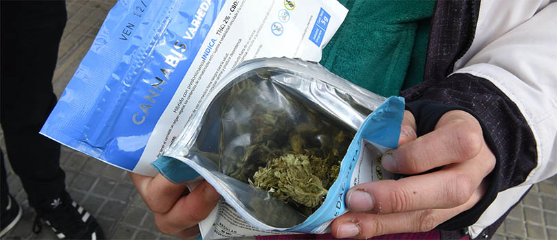 Legal Cannabis In Uruguay