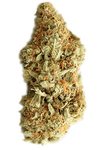 Lemon Kush Seeds Bud