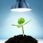 grow light and marijuana plant