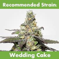 MSNL Feminized Seeds Wedding Cake Mediterranean Climate