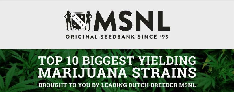 Marijuana-Seeds.NL (MSNL) Banner