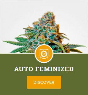 Auto Feminized Mix Pack by MSNL