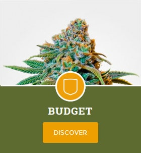 Budget Mix Pack by MSNL
