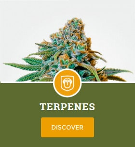 Terpenes Mix Pack by MSNL