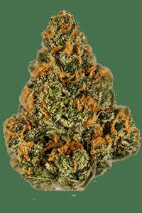 Mango Kush Seeds Bud