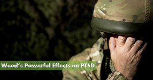 Marijuana and PTSD