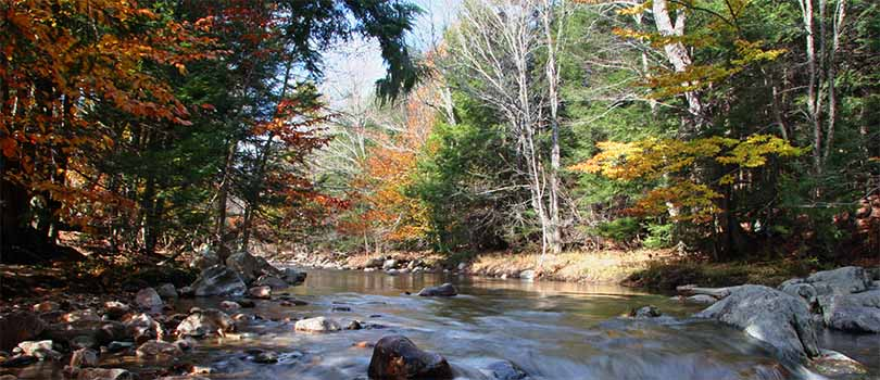 Massachusetts Nature