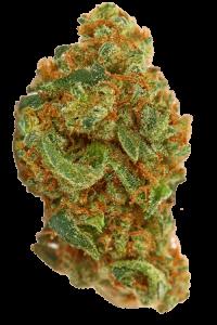 Maui Wowie Seeds Bud