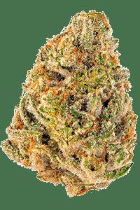 Mimosa Strain Bud