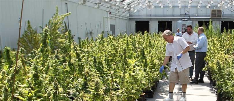 Minnesota Medical Cannabis Industry