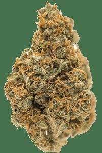 NYC Diesel Seeds Bud