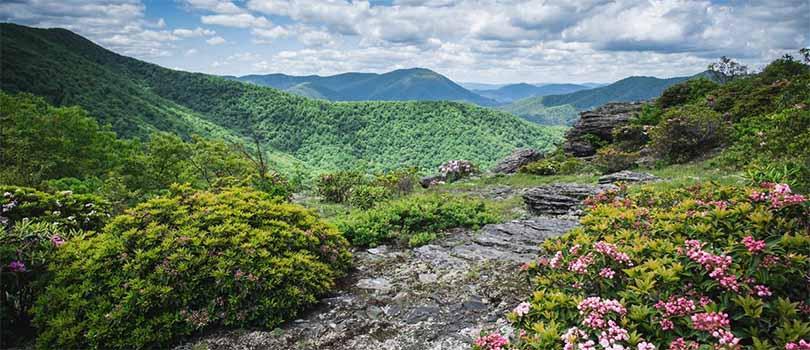 North Carolina Nature