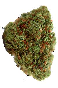 OG Kush Seeds Bud