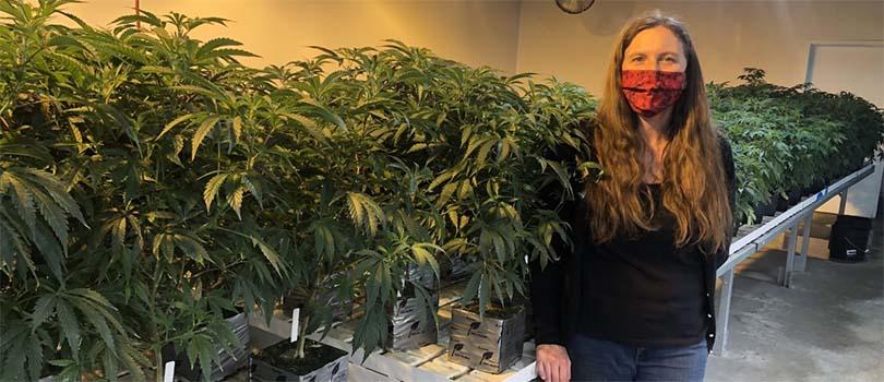 Oklahoma Cannabis Grow