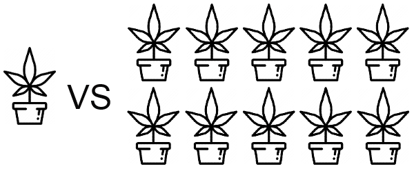 The Costs of Growing Weed Outdoor - 1 vs 10 plants