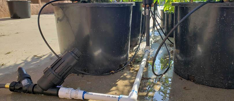 Outdoor Cannabis Grow Drip Irrigation system