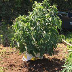 Outdoor Weed Garden Ground