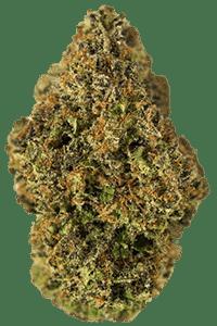 Pineapple Kush Seeds Bud