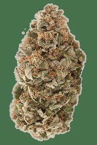 Pink Kush Seeds Bud