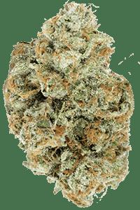 Platinum OG Seeds Bud