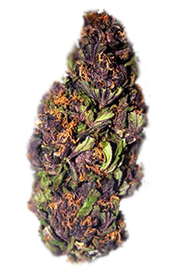 Purple Haze Seeds Nug