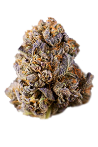 Purple Punch Seeds Nug