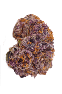 Purple Urkle Seeds Bud
