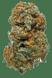 Romulan Weed Bud