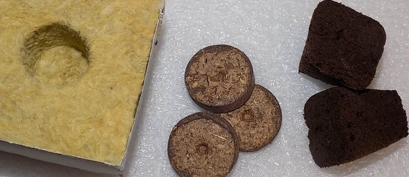 Rooting Cube Cannabis Seeds Germination