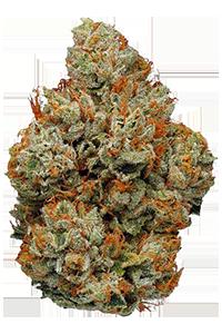 SFV OG Weed Bud