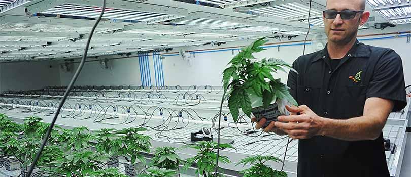 South Dakota Medical Cannabis