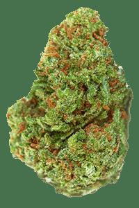 Strawberry Cough Seeds Nug