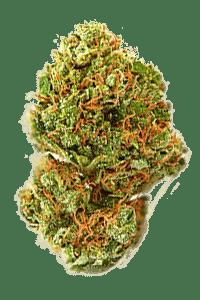 Strawberry Kush Seeds Bud