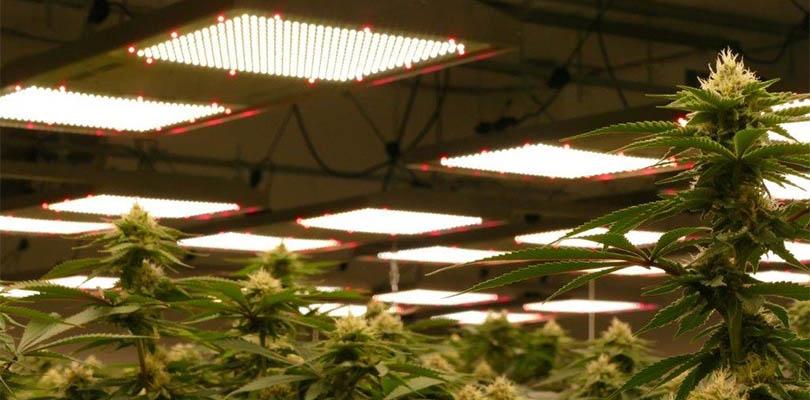 Supplementing lighting cannabis plants