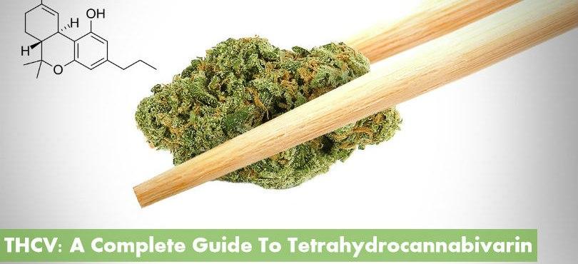 THCV: A Complete Guide to Tetrahydrocannabivarin