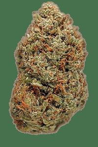 Tahoe OG Seeds Bud