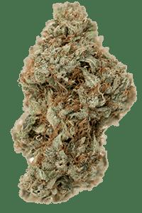 Tangerine Dream Seeds Bud