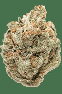 Tangie Seeds Bud