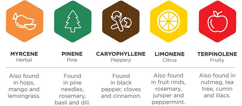 Terpenes Cannabis