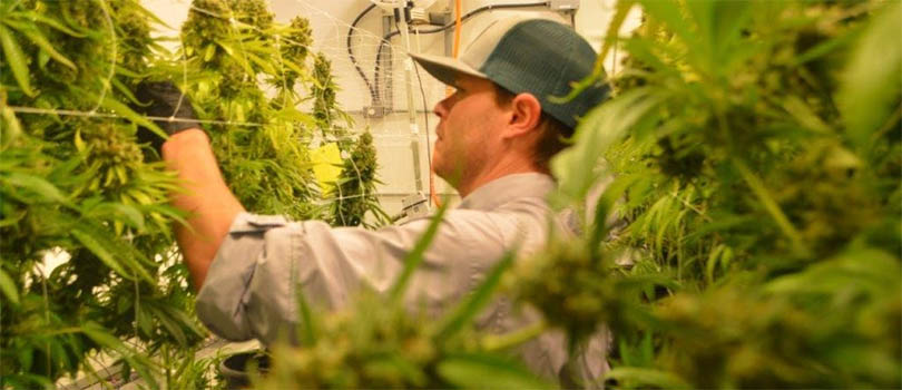 Texas Medical Marijuana