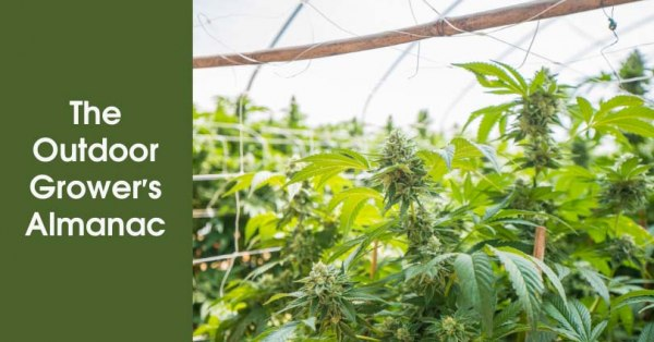 The Outdoor Grower's Almanac Featured Image