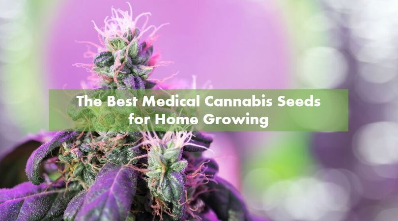 The Best Medical Cannabis Seeds for Home Growing