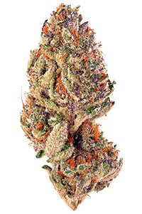 Tropicana Cookies Weed Bud