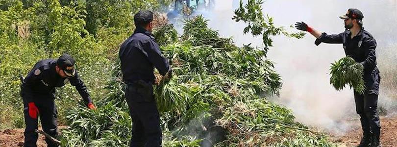 Turkey Cannabis Seizure