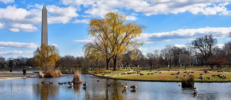 Washington DC Park