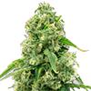 Wedding Cake Auto Feminized Cannabis Seeds