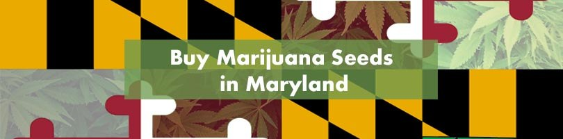 Where to Buy Marijuana Seeds in Maryland Featured Image
