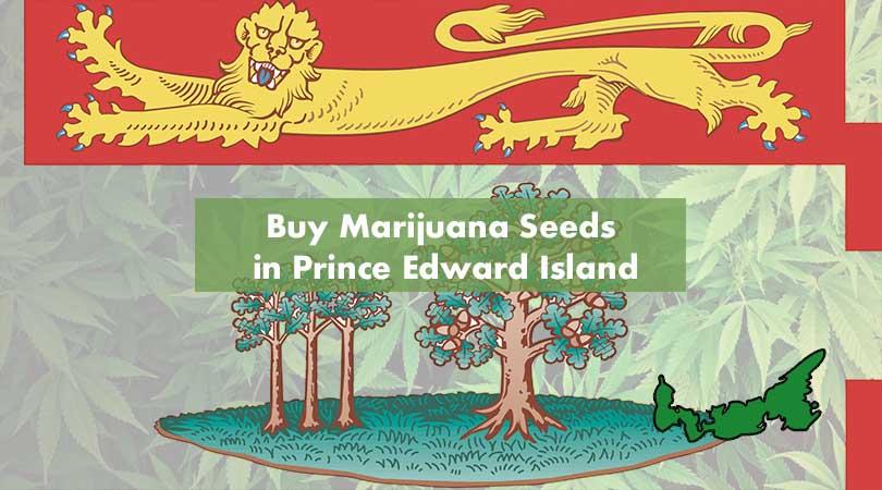Where to Buy Marijuana Seeds in Prince Edward Island Cover Photo