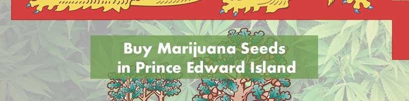 Where to Buy Marijuana Seeds in Prince Edward Island Featured Image